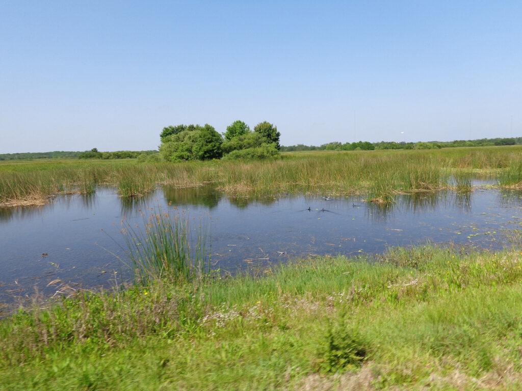 En våtmark omringad av grönska och blå himmel.