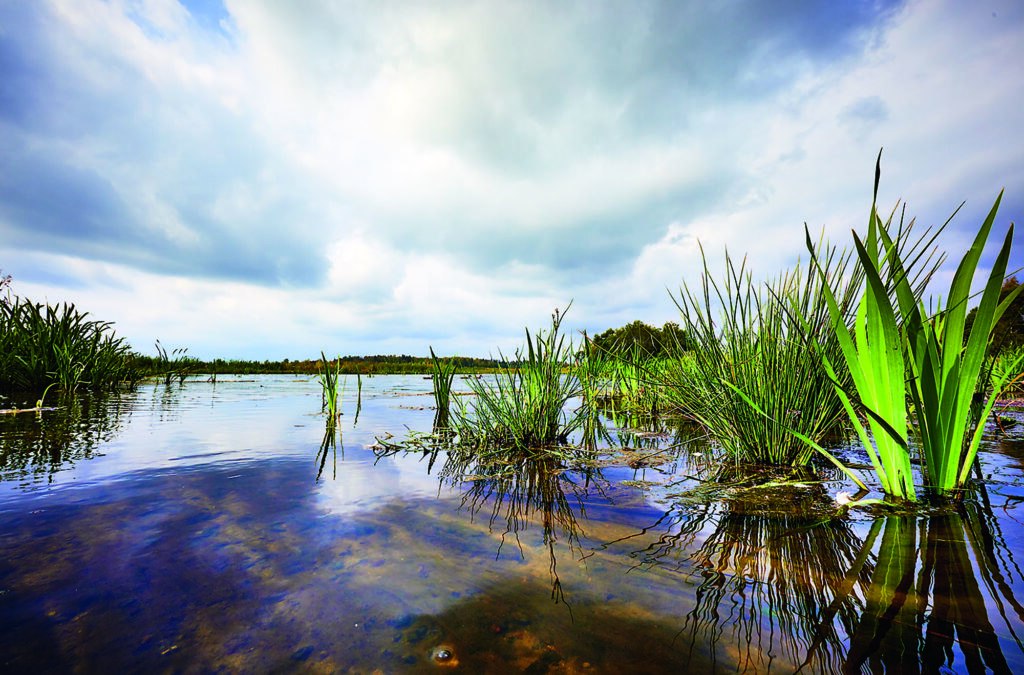 En närbild av en vattenyta med gröna växter.
